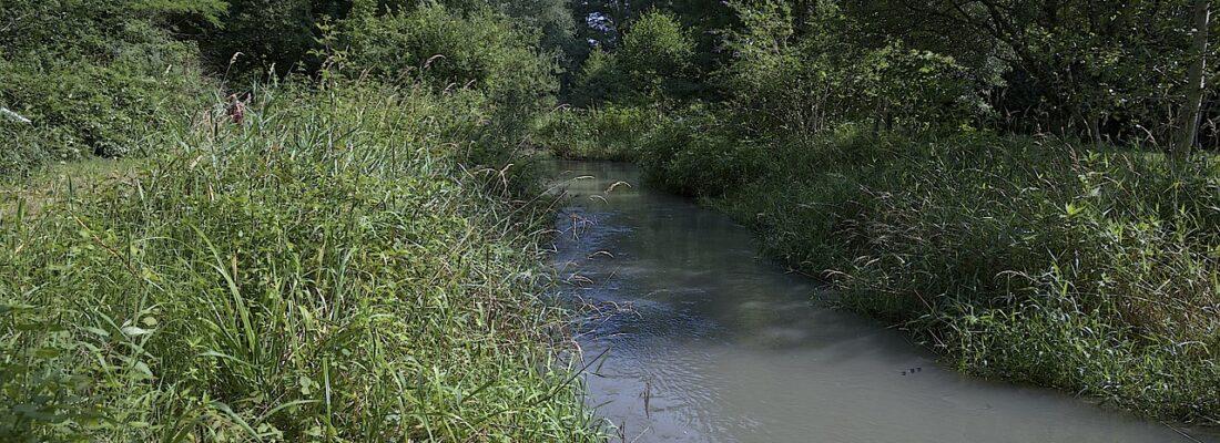 Creek Field Landscape Nature River  - J-Barbary / Pixabay